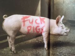 2003:07 - SA - Turf war - Fuck pigs - Wall and piece p154