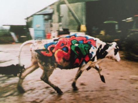 2003:07 - SA - Turf war - tagged cow - Wall and piece p152