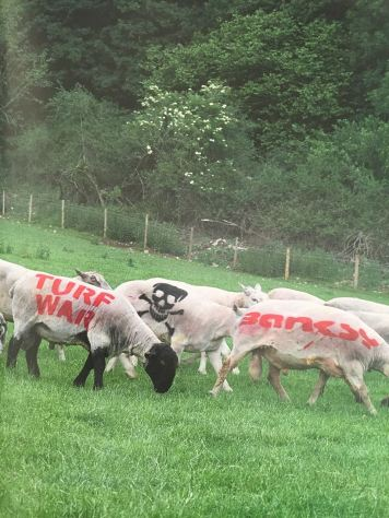 2003:07 - SA - Turf war - Tagged sheeps - Wall and piece p151