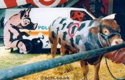 2003:07:18 - Original - Live cow w arrows - Turf War