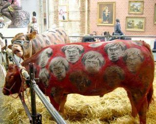 Live Cows - Turf War