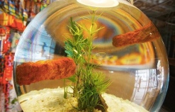 2008:10 - Original - The village pet store - Fish finger in bowl - Getty