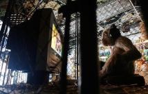 2008:10 - Original - The village pet store - Monkey w TV set - Getty