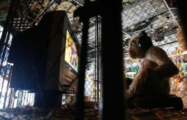 2008:10 - Original - The village pet store - Monkey w TV set - Getty