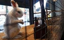 2008:10 - Original - The village pet store - Rabbit - Getty