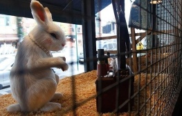 2008:10 - Original - The village pet store - Rabbit - Getty
