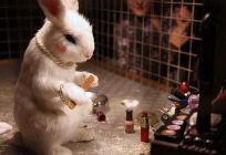 2009:6 - Original - Installation - BvBM Rabbit wearing cosmetics - unknown source