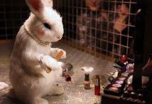 2009:6 - Original - Installation - BvBM Rabbit wearing cosmetics - unknown source