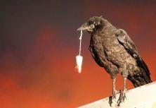 2009:7 - Original - Sculpture - BvBM - Crow w tampax - Arrested Motion
