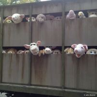 2013:10:11 - New York - BOTI - Pigs en route