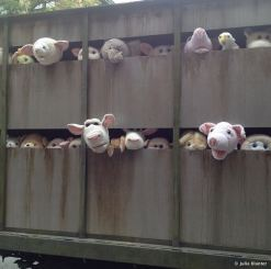 2013:10:11 - New York - BOTI - Pigs en route
