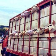 2014:6:26 - UK - Glastonbury - Sirens of Lambs - streetartnews